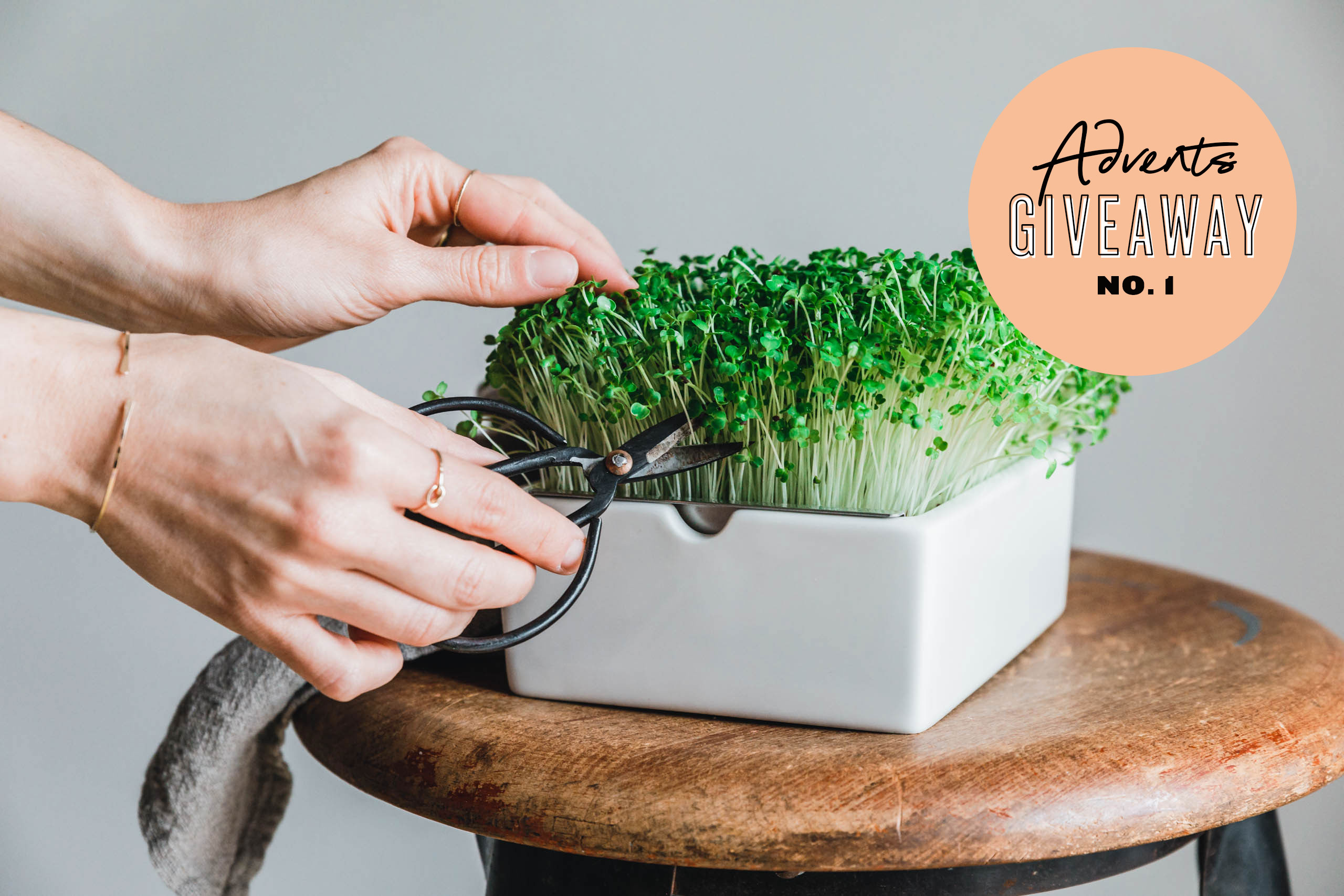 GIVEAWAY! 3 Microgreens Special Edition Starter-Kits von ...